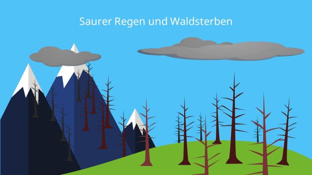 Saurer Regen Auswirkungen , Waldsterben, Pflanzen, Boden, Schadstoffe