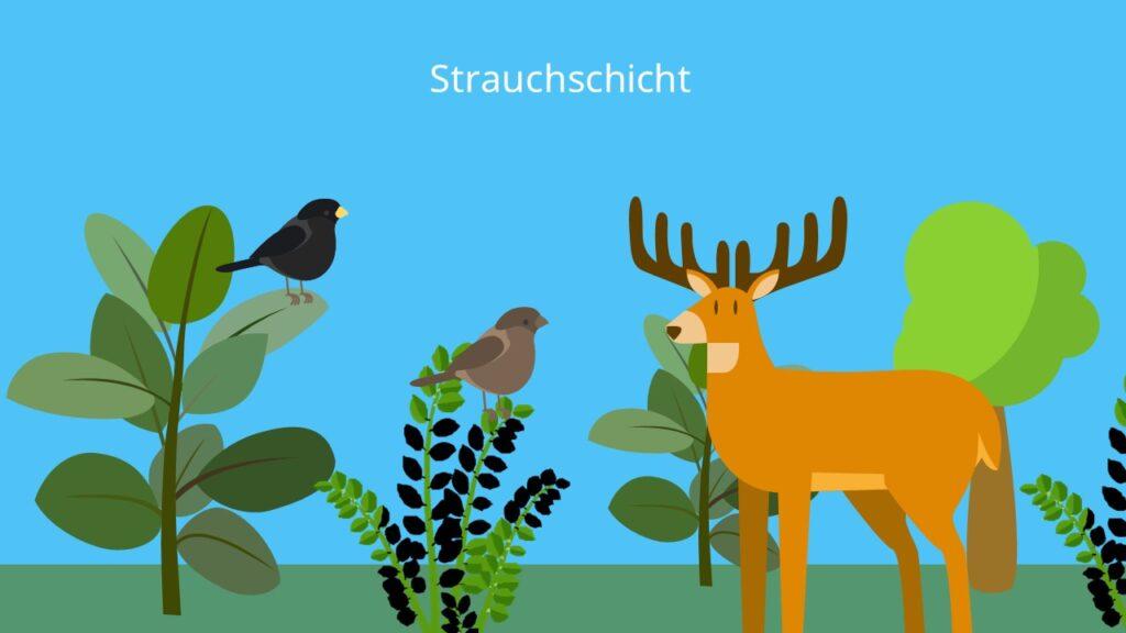 2. Stock des Waldes, Obergeschoss, Ökosystem Wald, Sträucher, Pflanzen des Waldes, Stockwerke des Waldes, Schichten des Waldes