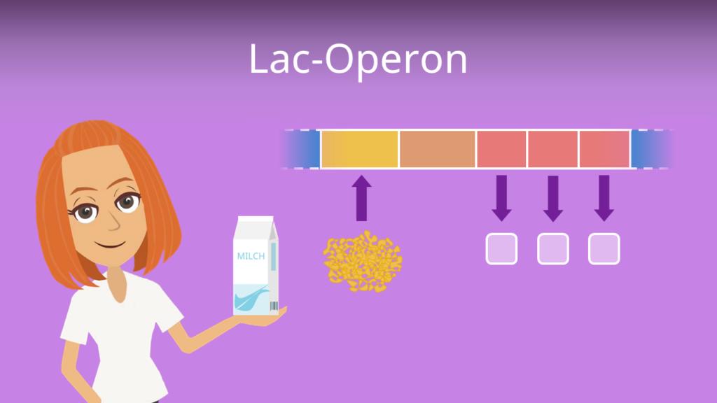 Zum Video: Lac-Operon