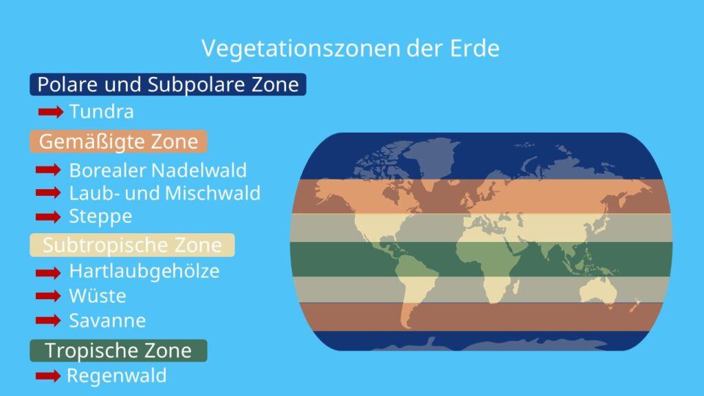 Klimazonen, Vegetationszone, Europa, Afrika, Polare Zone, Tundra, Gemäßigte Zone, Savanne, Borealer Nadelwald, Taiga, Laub- und Mischwald, Subtropische Zone, Steppe, Savanne, Wüste, tropische Zone, Tropischer Regenwald