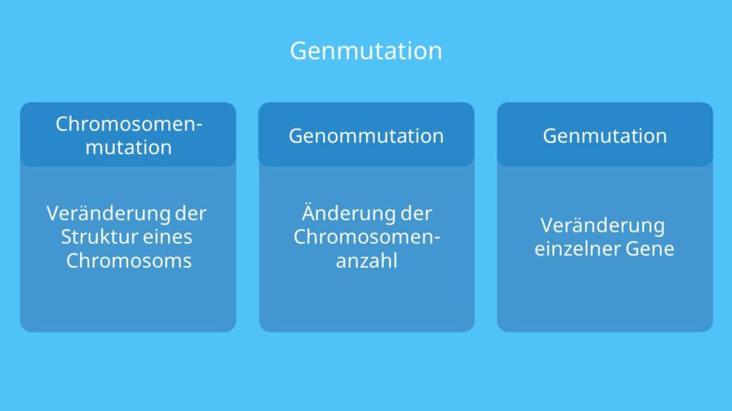 Mutation, Mutationsarten, Genmutation, Genommutation, Genmutation, DNA