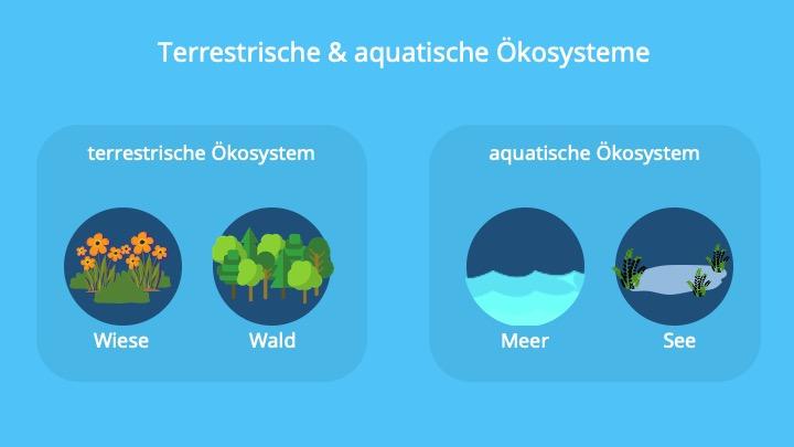 terristische Ökosysteme, aquatische Ökosysteme, limnische Ökosysteme, marine Ökosysteme, Salzgehalt, Ökosystem Wald, Ökosystem Wiese, Ökosystem Regenwald, Ökosystem Hecke, kosystem See, Ökosystem Fließgewässer, Ökosystem Teich, Ökosystem Meer, Ökosystem Korallenriffe, Ökosystem Ozean