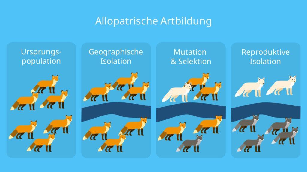 Speziation, geografische Isolation, Beispiel, Separation, Selektion, Mutation, Genfluss, Genpool, reproduktive Isolation, Entstehung neuer Arten