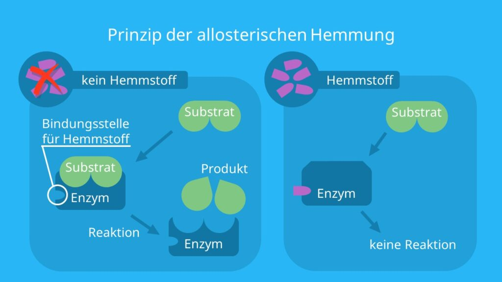Enzym, reversible Hemmung, nicht-kompetitive Hemmung, allosterische Hemmung reversibel