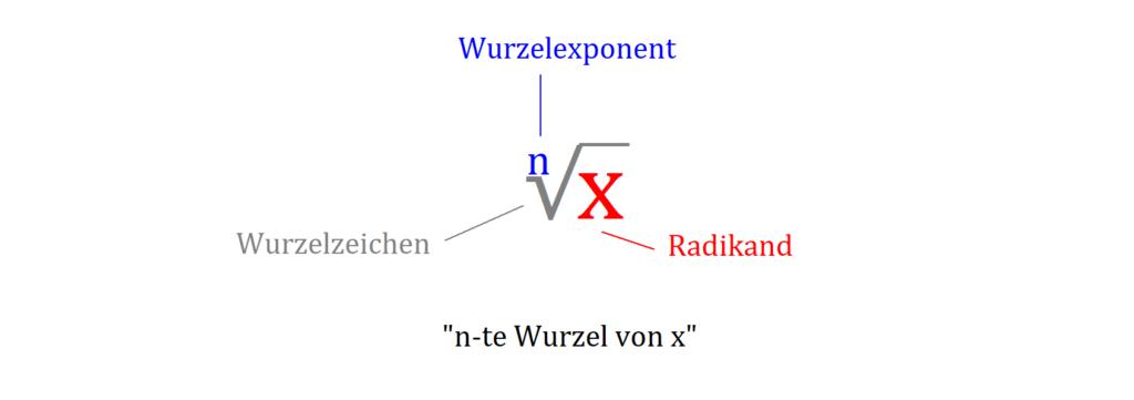 Wurzel, Wurzel Begriffe, Radikand, Wurzelexponent, Wurzelzeichen, Wurzel von x