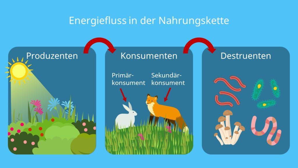 Energie, Ökosystem, Nahrungskette, Produzenten, Konsumenten, Destruenten, Sonnenenergie, Kohlenhydrate