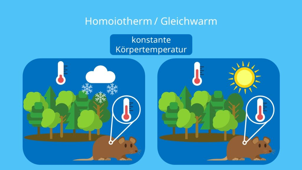 Homoiotherme Tiere, Wechselwarme Tiere, endotherme Tiere, endotherm, Säugetiere, Körpertemperatur, Umgebungstemperatur, Körpertemperatur konstant