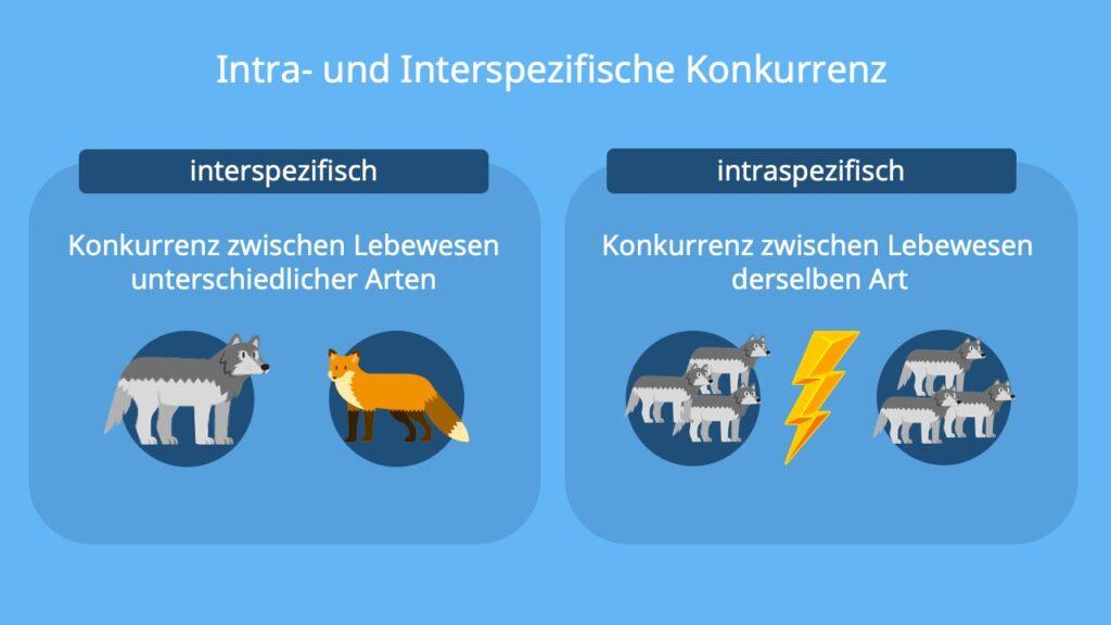 Intraspezifische Konkurrenz Beispiel, Intraspezifische Konkurrenz Beispiel, Intraspezifische und Interspezifische Konkurrenz