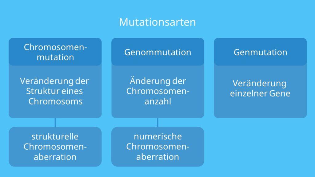 Mutationsarten, Chromosomenmutation, Genmutation, Genommutation, Chromosomenaberration, strutkturelle Chromosomenaberration