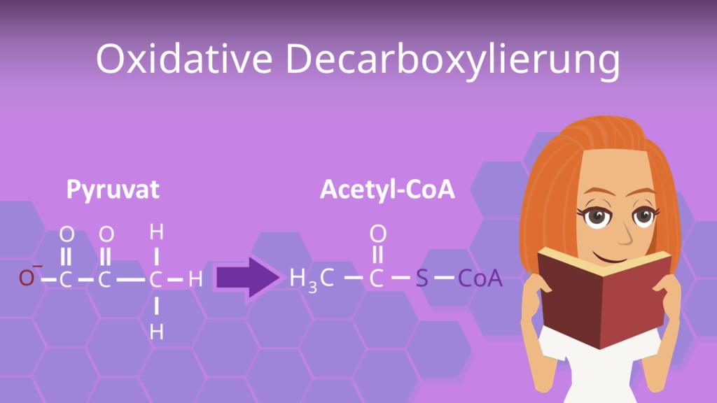 Zum Video: Oxidative Decarboxylierung