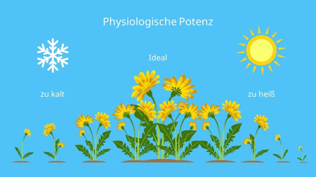 Ökologische Potenz, Beispiel, Löwenzahn, Optimum, Minimum, Maximum, Temperatur, Lebensbedingungen, abiotischer Faktor, Ökologie
