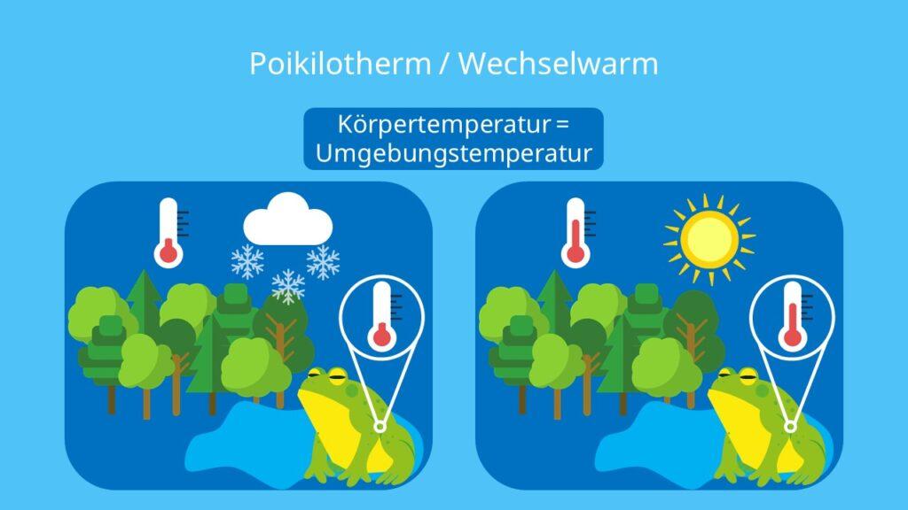 Poikilotherme Tiere, Wechselwarme Tiere, Ektotherme Tiere, ektotherm, Körpertemperatur, Lufttemperatur, Frosch, Amphibien