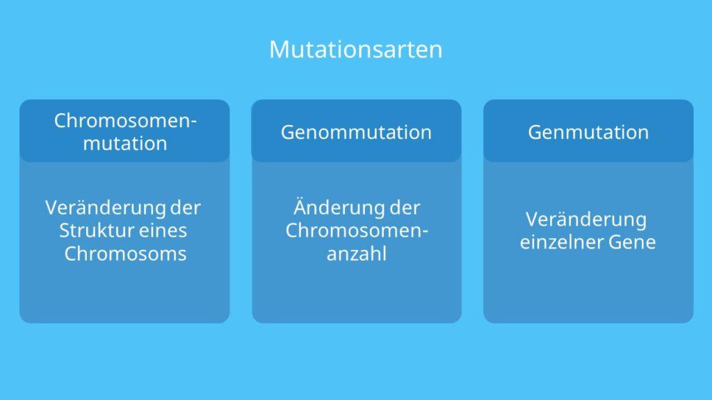 Chromosomenmutation, Genmutation, Genommutation, Chromosomenaberration, strutkturelle Chromosomenaberration