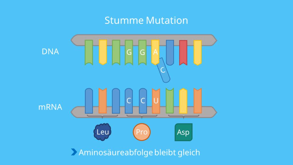 Codon, DNA, mRNA, Punktmutation, Base, Mutation, Aminosäuresequenz, Phänotyp, Proteinbiosynthese, Translation