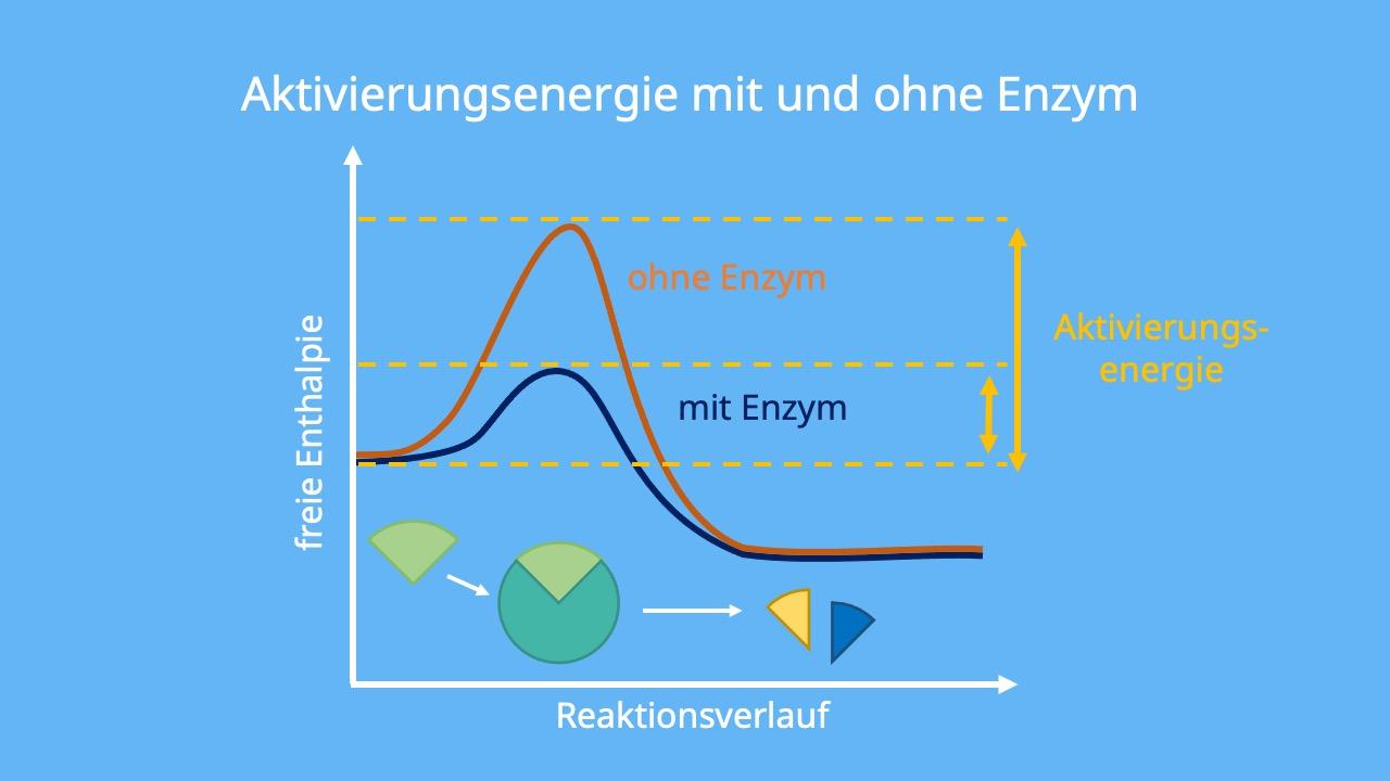 Substrat, enzymatische Reaktion, Enzymreaktion, Funktion von Enzymen, Wirkungsweise Enzyme, Katalysieren