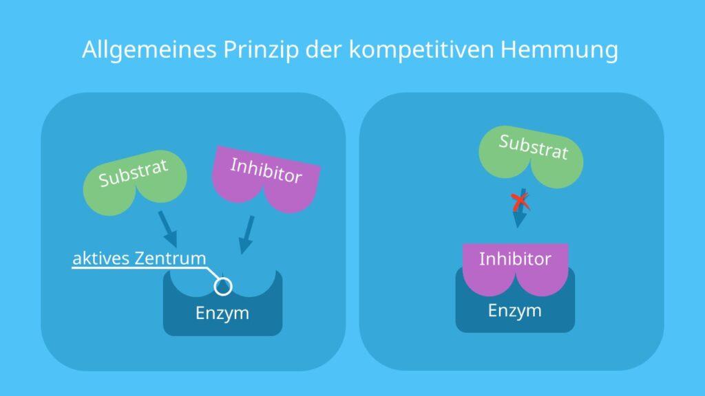 aktives Zentrum, Substrat, Inhibitoren, enzymatische Hemmung