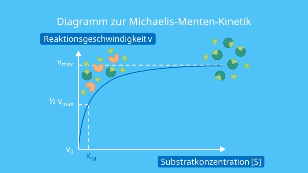 Diagramm zur Michaelis-Menten-Kinetik, Enzyme, Substratkonzentration, Enzymaktivität, Michaelis Menten, Abhängigkeit der Enzymaktivität von der Substratkonzentration, Michaelis Menten Diagramm