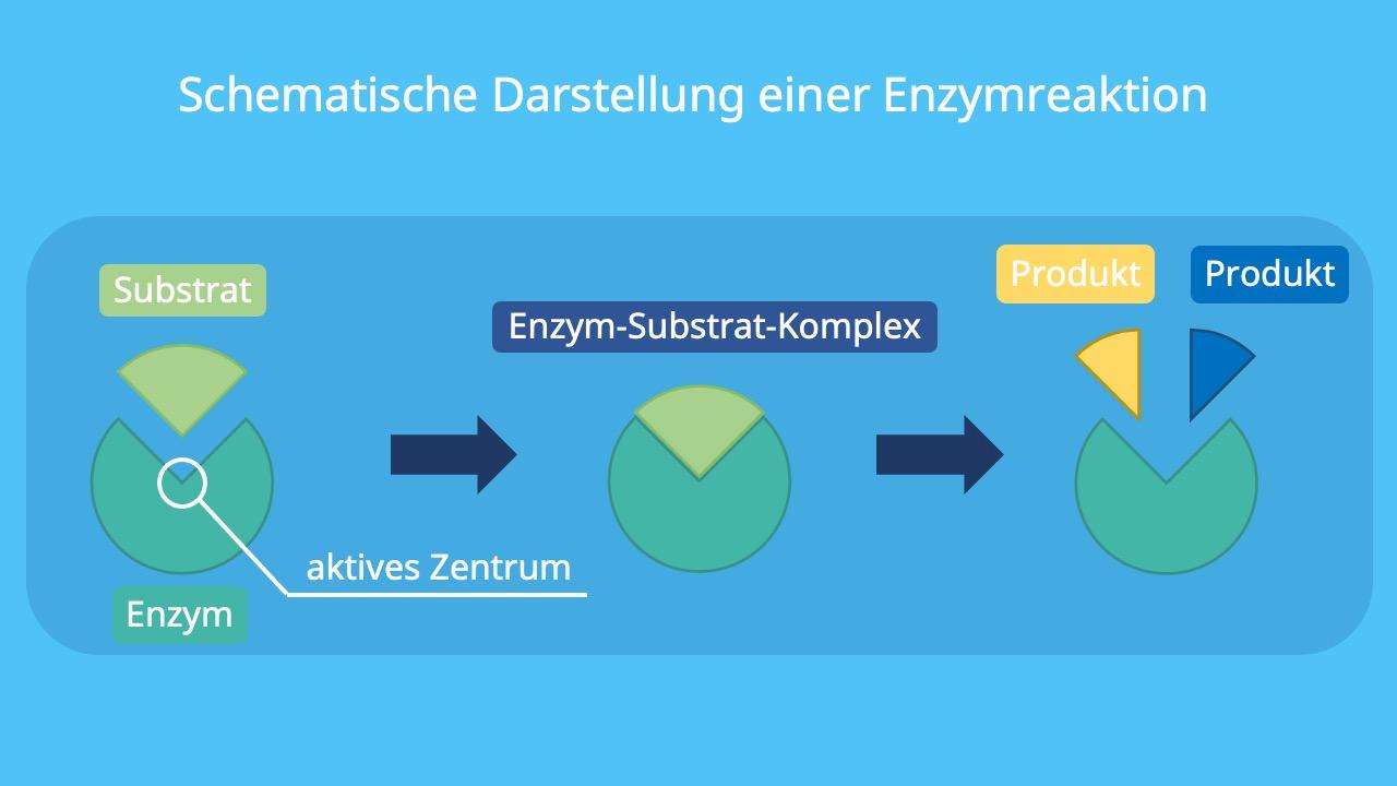 Enzyme, enzymatische Reaktion, Substrate, aktives Zentrum