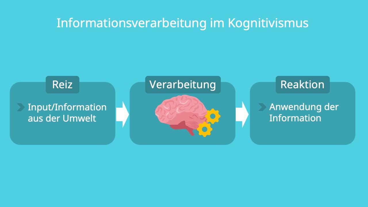 Input, Output, kognitive Prozesse, Reiz, Stimuli, Reaktion, Verhalten, Verarbeitung, Information, Gehirn, Anwendung