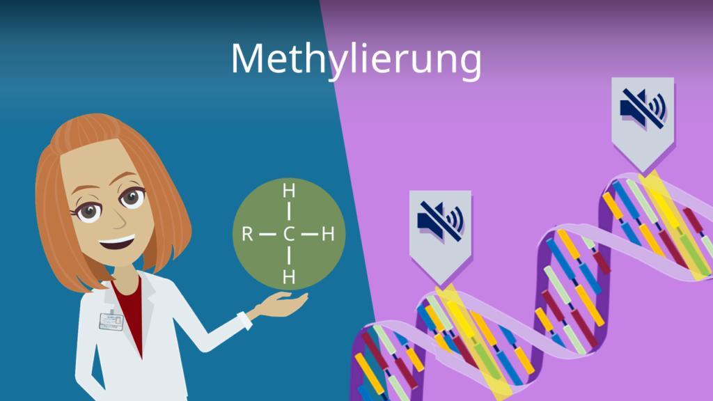 Zum Video: Methylierung