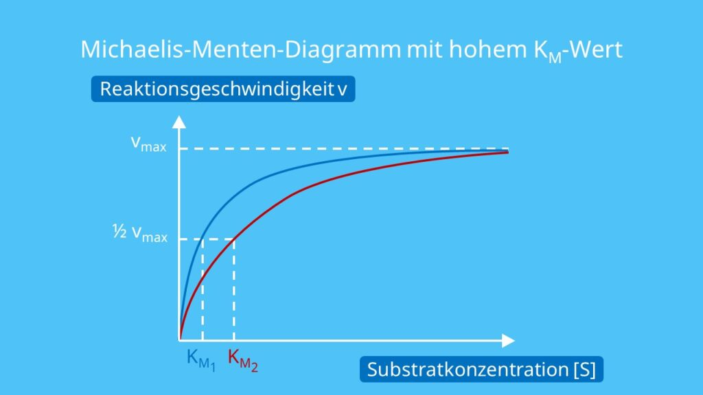 Michaelis-Menten-Diagramm mit hohem KM-Wert, Michaelis Menten Konstante, Michaelis Konstante, Michaelis-Menten-Gleichung, Affinität, Substrate, Substratkonzentration, KM Wert