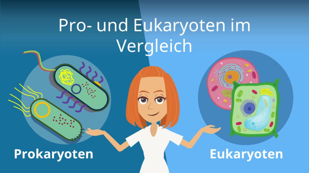 Zum Video: Pro- und Eukaryoten im Vergleich