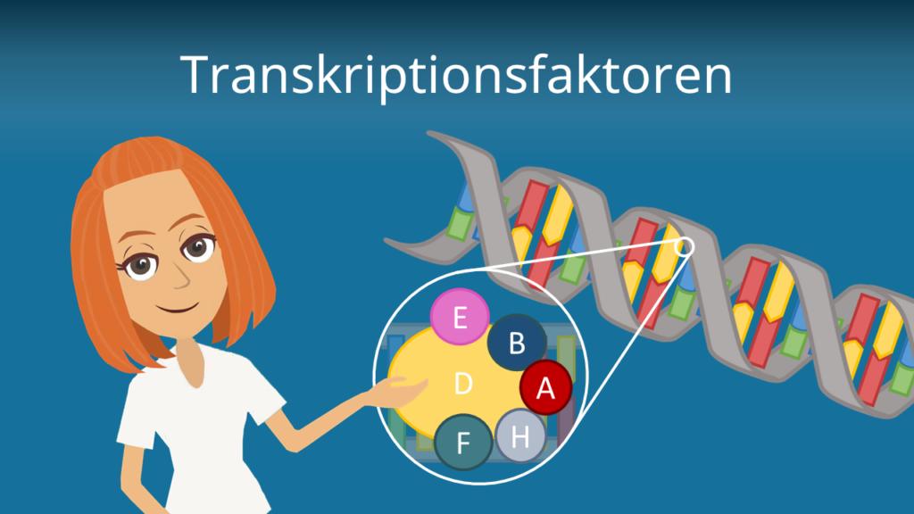 Zum Video: Transkriptionsfaktoren