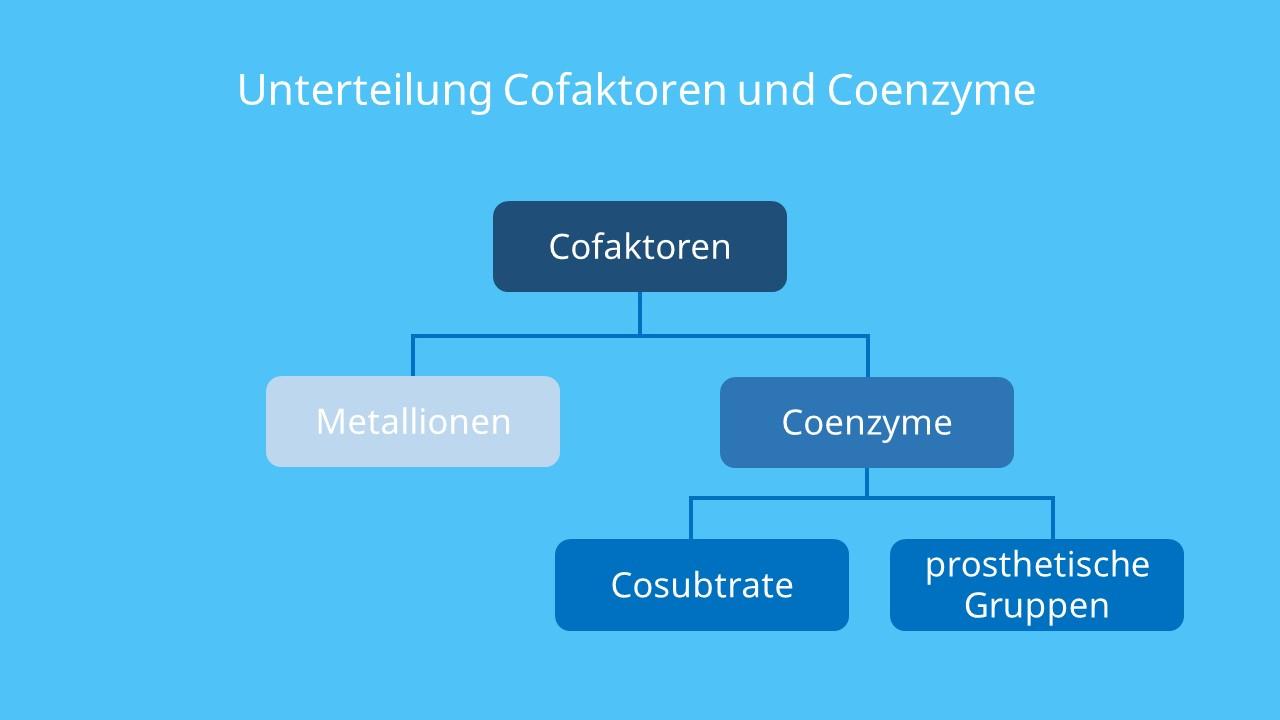 Enzyme Cofactor, Cofaktoren Enzyme, prosthetische Gruppe