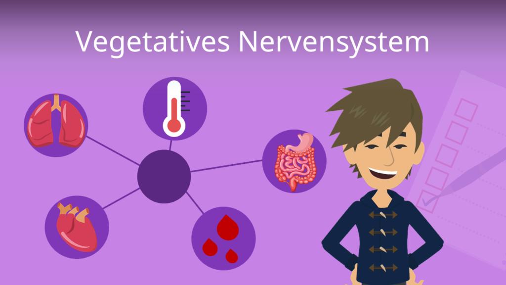 Zum Video: Vegetatives Nervensystem