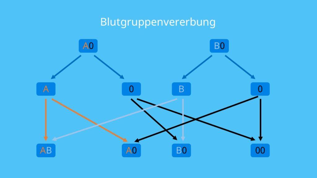 Blutgruppenvererbung, Blutgruppe A, Blutgruppe B, Blutgruppe AB, Blutgruppe 0, kodominant, rezessiv, dominant, Mutter, Vater, Kind