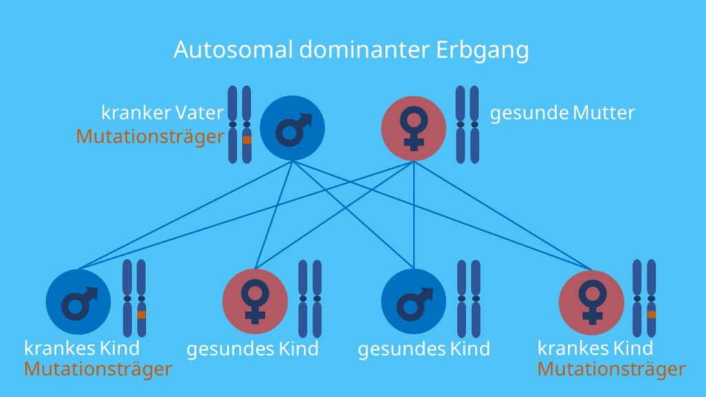 autosomal dominanter Erbgang; alt Text: Autosomen, dominant, Stammbaumanalyse, autosomal, Vererbung, Allel, Gen