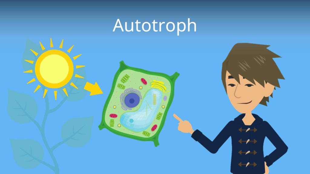 Zum Video: Autotroph