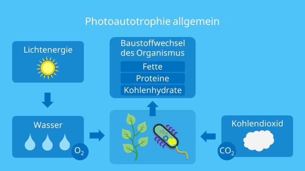 Photoautotrophie allgemein, autotroph, autotrophen, photoautotroph