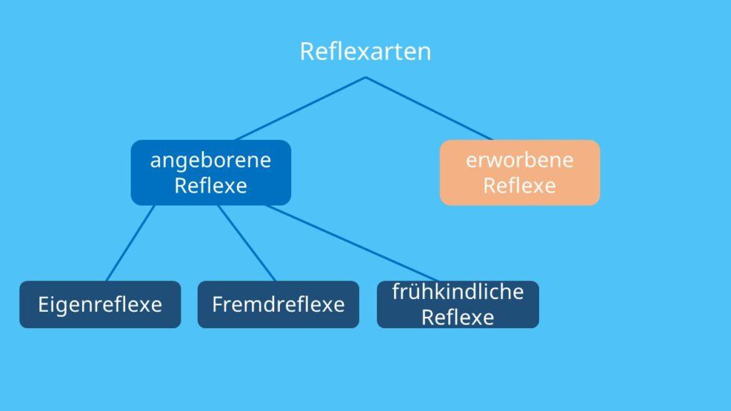 Fremdreflex, Eigenreflex, frühkindlicher Reflex, konditionierte Reflexe, bedingte Reflexe, unbedingte Reflexe
