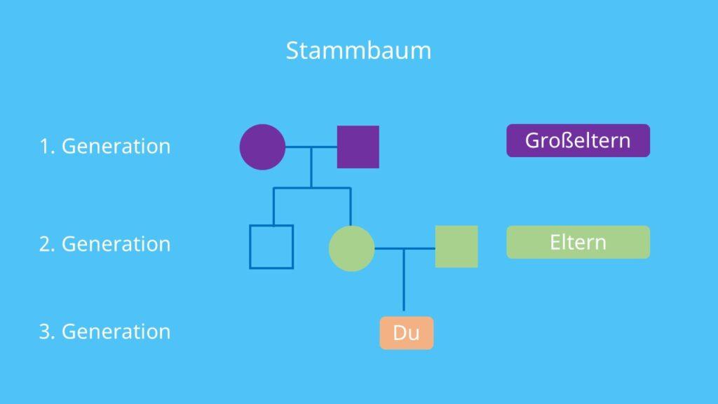 Stammbaumanalyse, Erbkrankheiten, Familie, Kinderwunsch, autosomal, gonosomal, Erbgänge