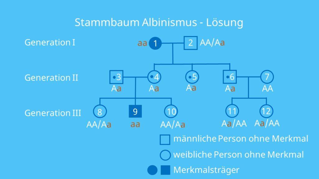 Stammbaumanalyse Übungen, Stammbaumanalyse Aufgaben mit Lösungen, autosomal rezessiv, Erbkrankheit, Stammbaumanalyse Beispiel, Stammbaum Beispiel