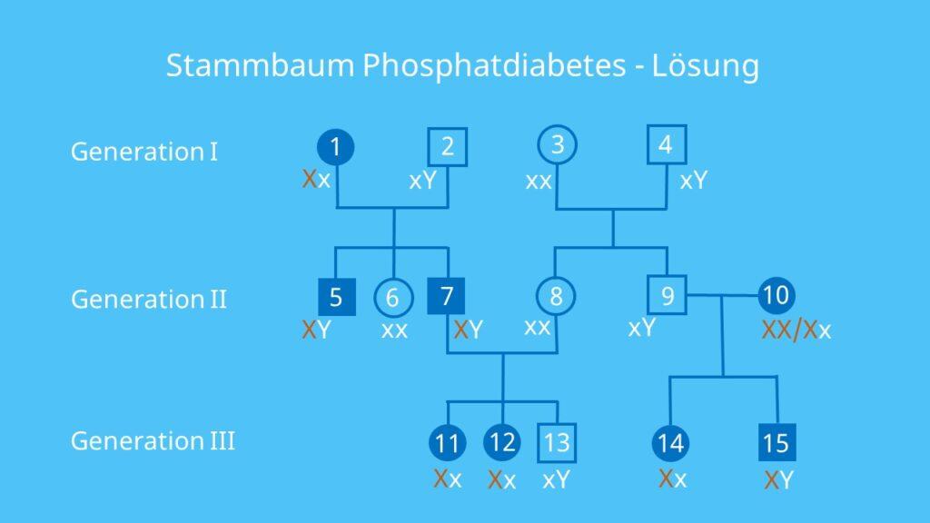 Stammbaumanalyse Übungen, Aufgaben mit Lösungen, gonosomal dominant, Erbkrankheit, X-Chromosomal, Stammbaumanalyse Beispiel, Stammbaum Beispiel