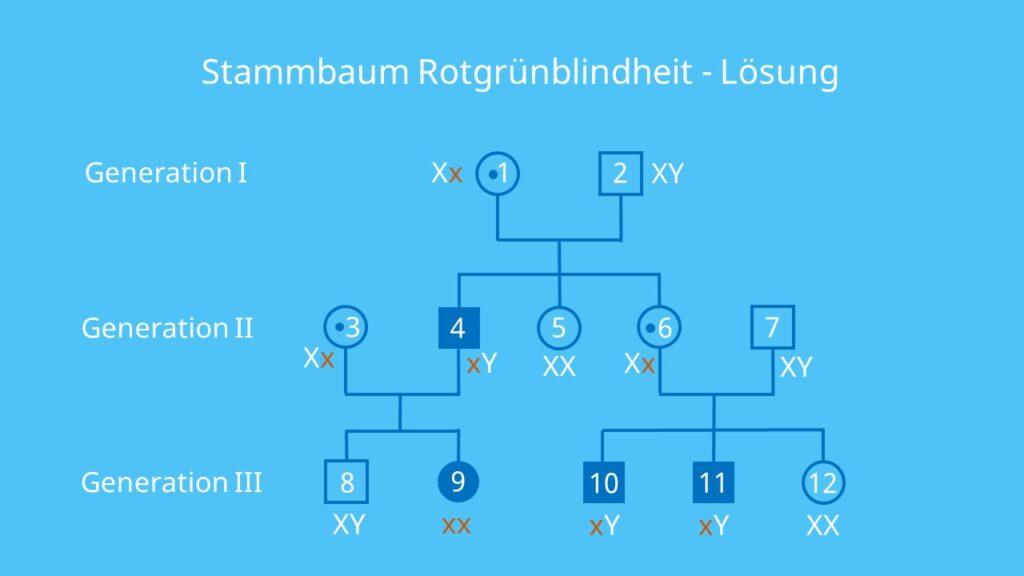 Stammbaumanalyse Übungen, Stammbaumanalyse Aufgaben mit Lösungen, gonosomal rezessiv, Erbkrankheit, X-Chromosomal, Stammbaumanalyse Beispiel, Stammbaum Beispiel