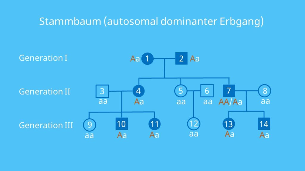 Autosomen, dominant, Stammbaumanalyse, autosomal, Vererbung, Allel, Gen