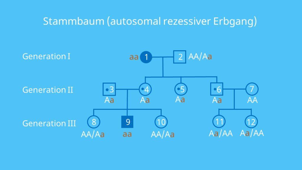 Autosomen, rezessiv, Stammbaumanalyse, autosomal, Vererbung, Allel, Gen, Übung, Aufgabe, Beispiel, Lösung