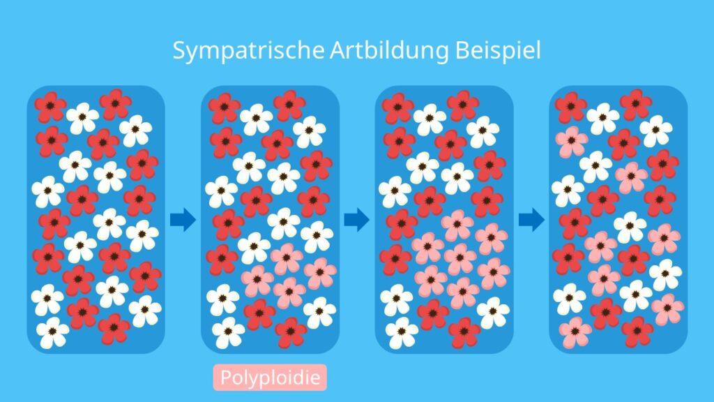 Sympatrische Artbildung Beispiel, Artbildung, artentstehung, sympatrische Artbildung, Polyploidie, Polyploidisierung