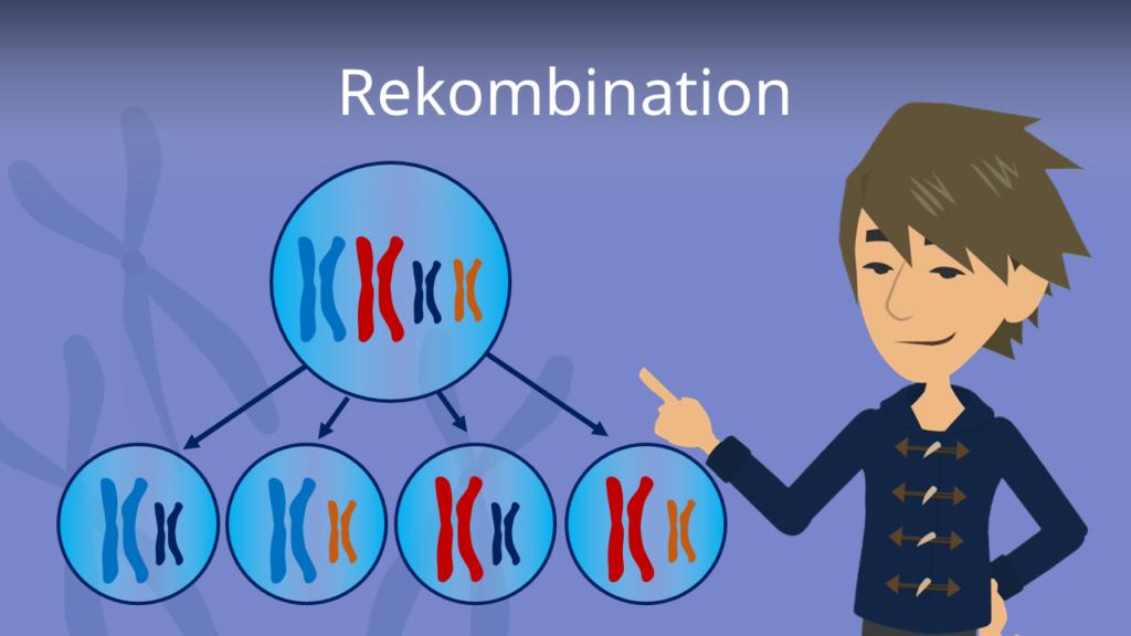 Zum Video: Rekombination