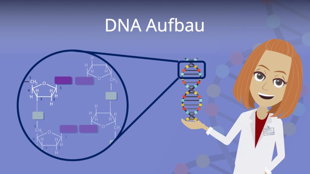 Zum Video: DNA Aufbau