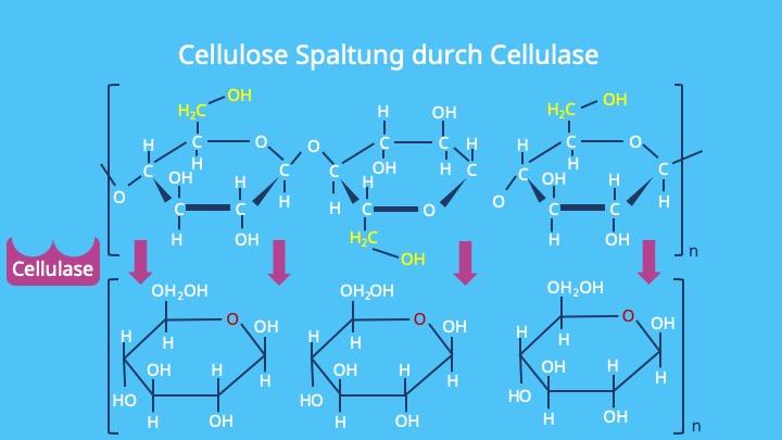 Was ist Zellulose, Was ist Cellulose, Cellulose Strukturformel, Cellulose Struktur