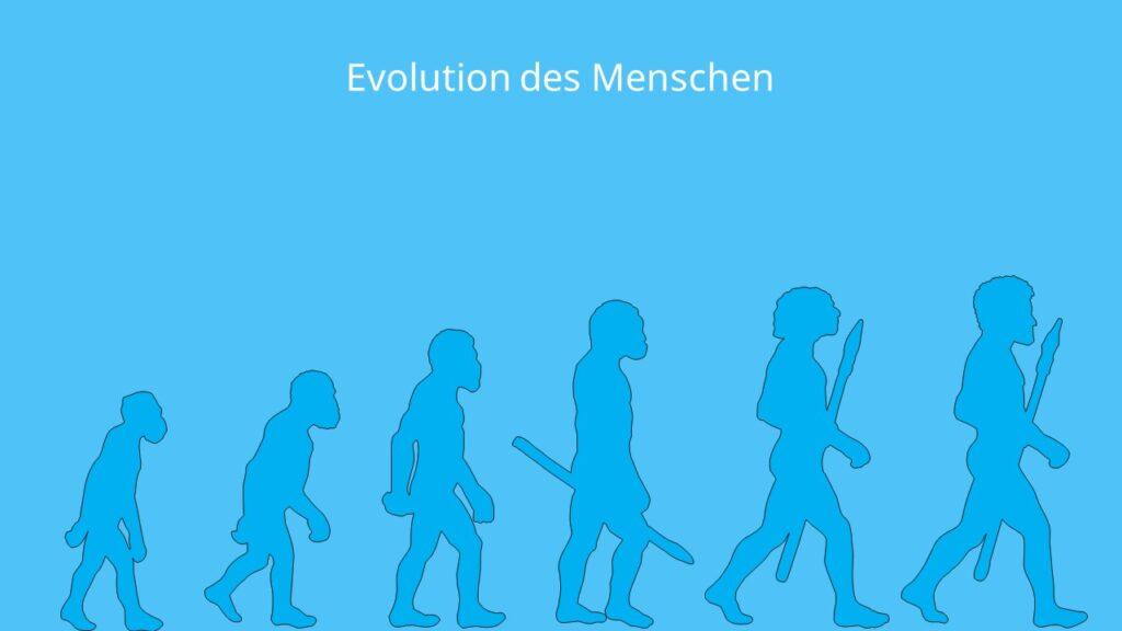 Evolutionstheorie, Evolution des Menschen, Selektion, Angepasstheit, Anpassung, aufrechter Gang