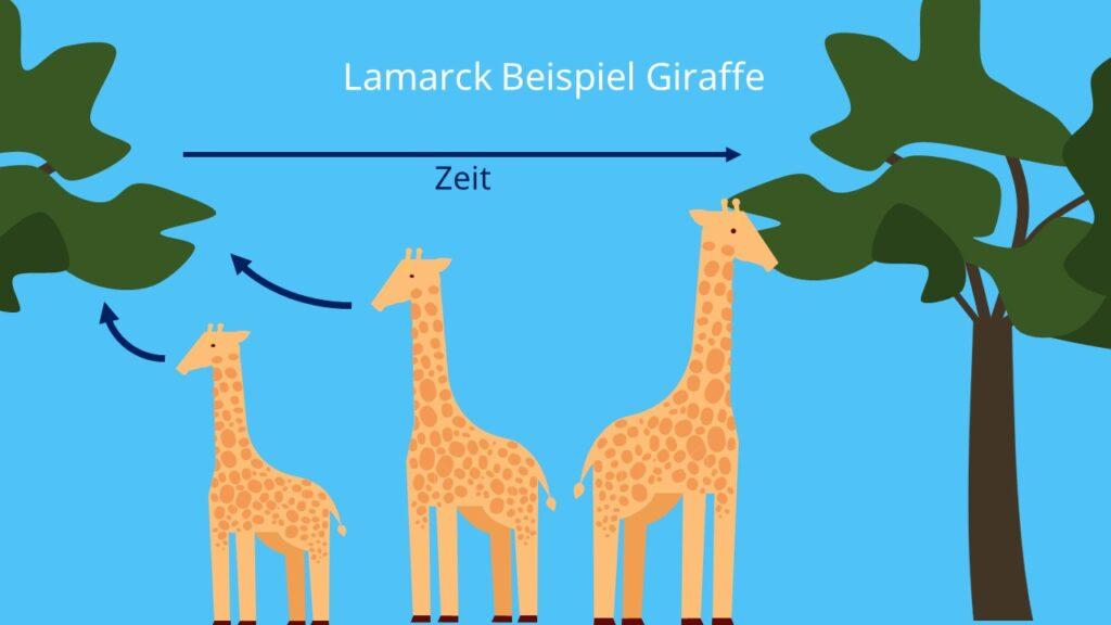 Lamarck, Evolutionstheorie, Giraffe, aktiver Prozess, Inkonstanz der Arten, Beispiel