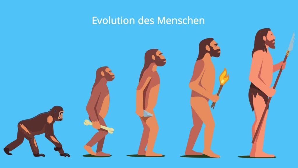 Entwicklung Mensch, seit wann gibt es Menschen, Frühmensch, Hominiden, homo erectus, homo sapiens, Homo