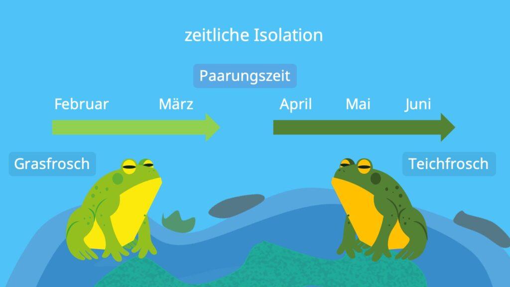 Isolation Biologie, Isolationsmechanismen, Grasfrosch, Teichfrosch, Beispiel, zeitliche Isolation, präzygotisch