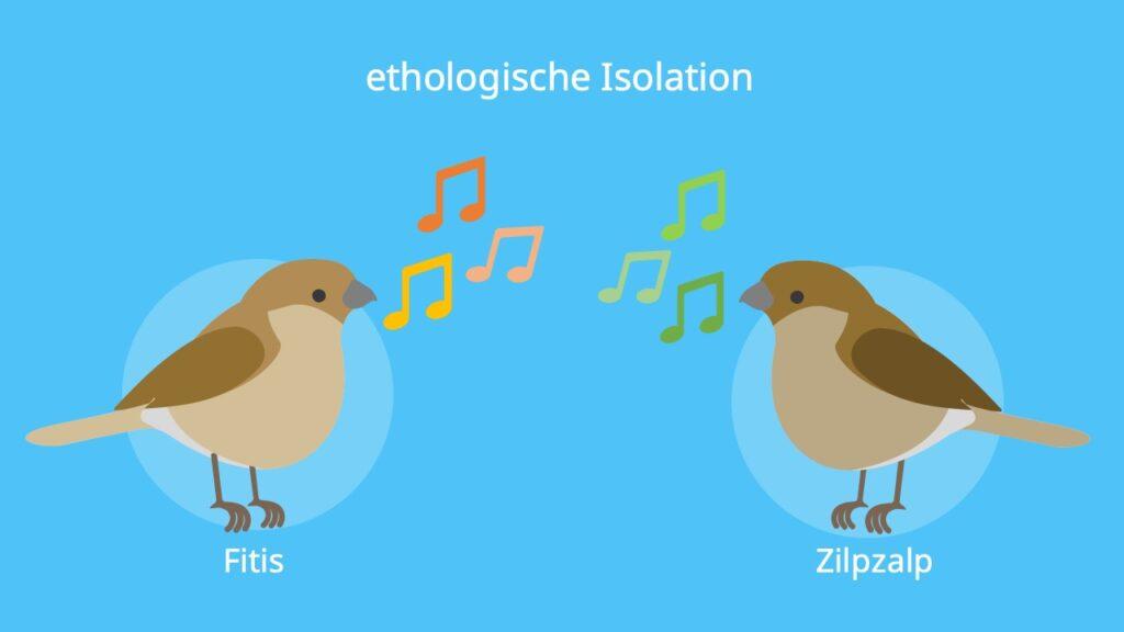 Isolation Biologie, Isolationsmechanismen, Beispiel, ethologische Isolation, Präzygotisch