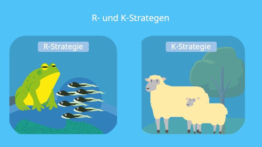 R Stratege, K Stratege, Fortpflanzungsstrategie, Schaf, Frosch